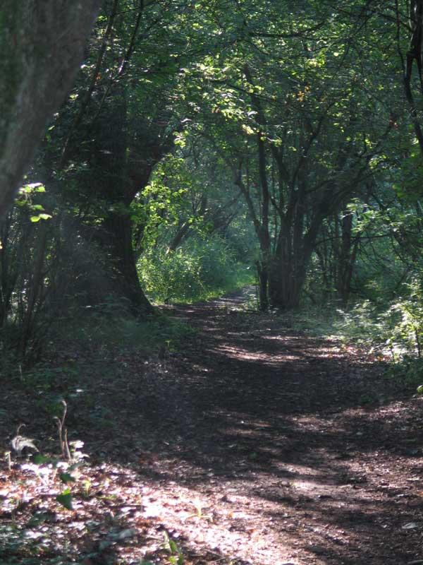 Hvad mon der venter igennem den tunnel af gamle træer